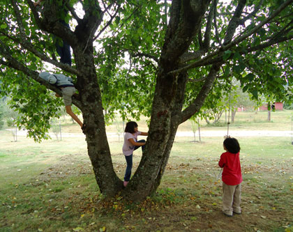 Climbing trees and swinging on a rope are great fun at Camp Windy Hill.