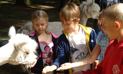 In Nature Crafts we visited Triple M Alpacas, where we fed the alpacas, learned about their care, and took home a sample